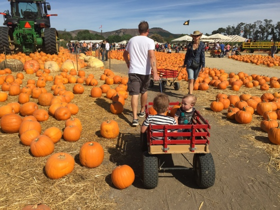 PUMPKIN-PATCH-2015